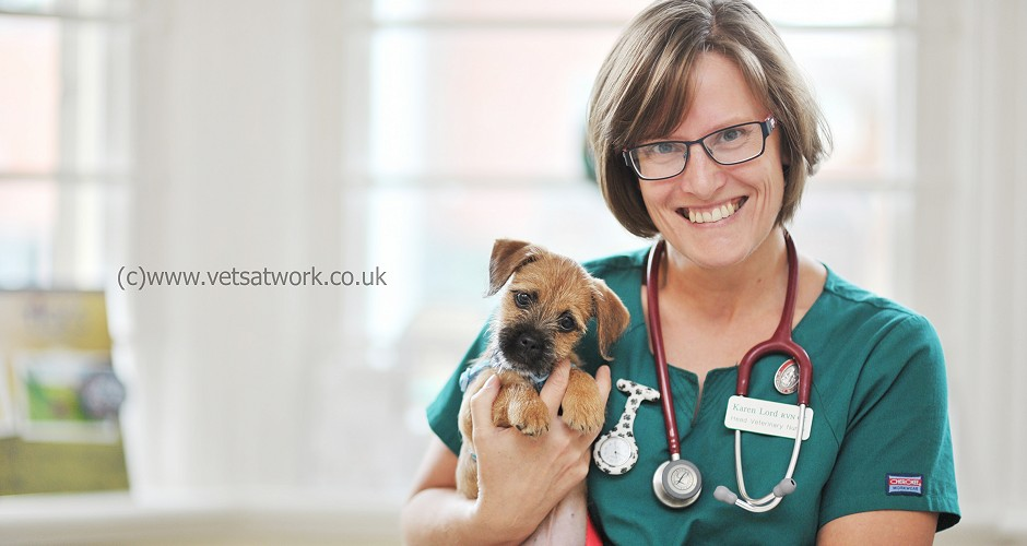 Veterinary nurse Photography